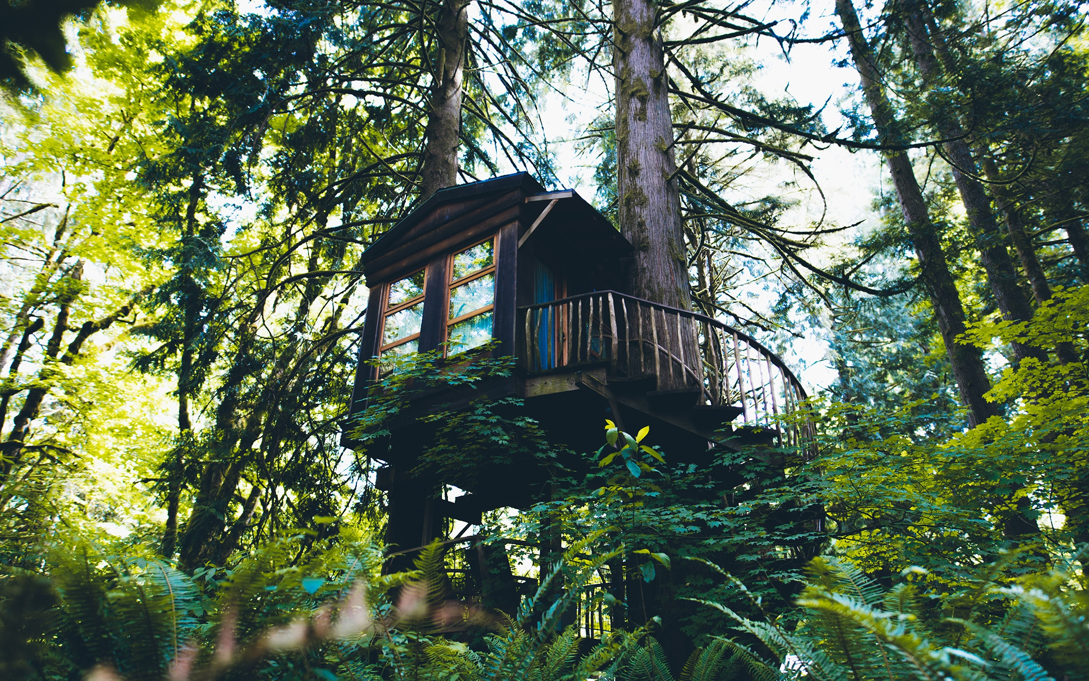 отпустила век дом на дереве в лесу фото отца