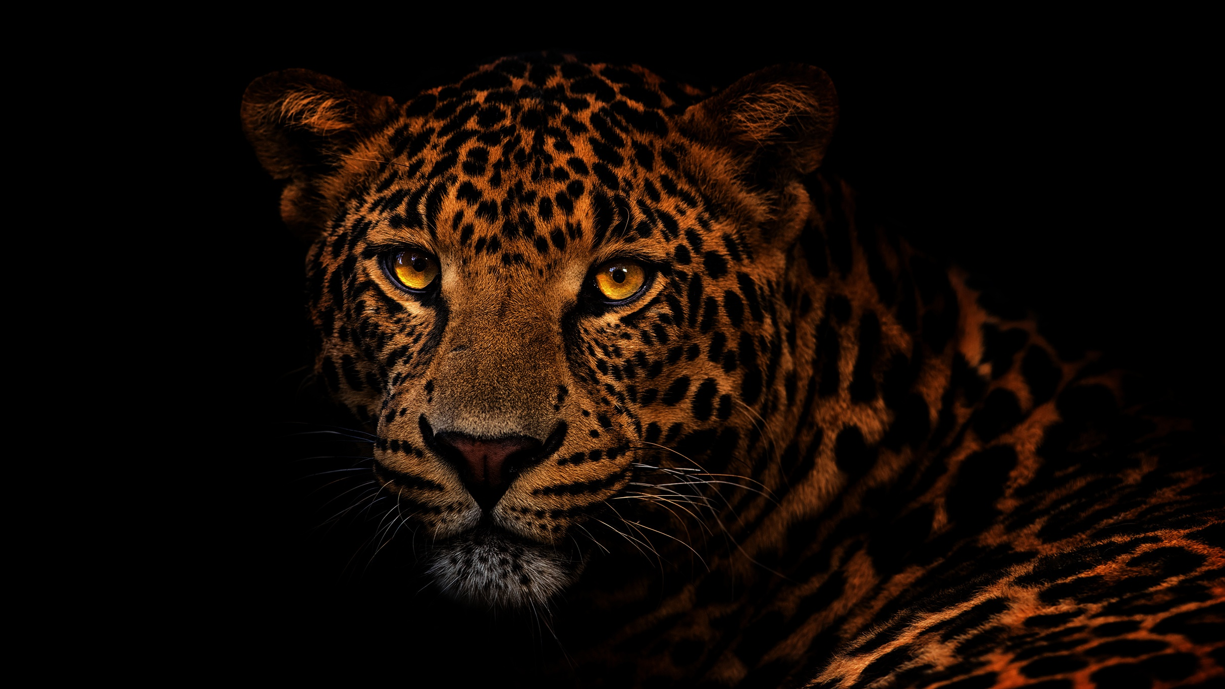 картинки леопарды с черным фоном трёхкомнатную квартиру подай