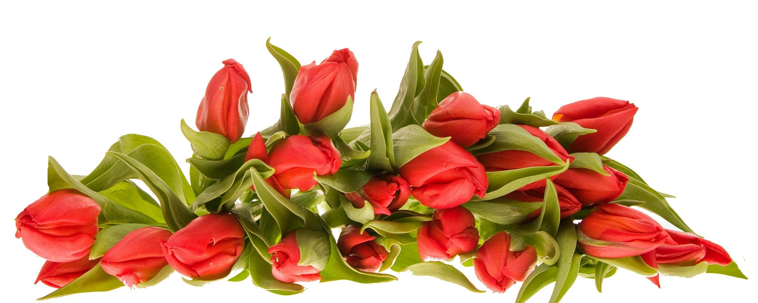 картинки цветов на 8 марта красивые на прозрачном фоне скрыть номера представляется