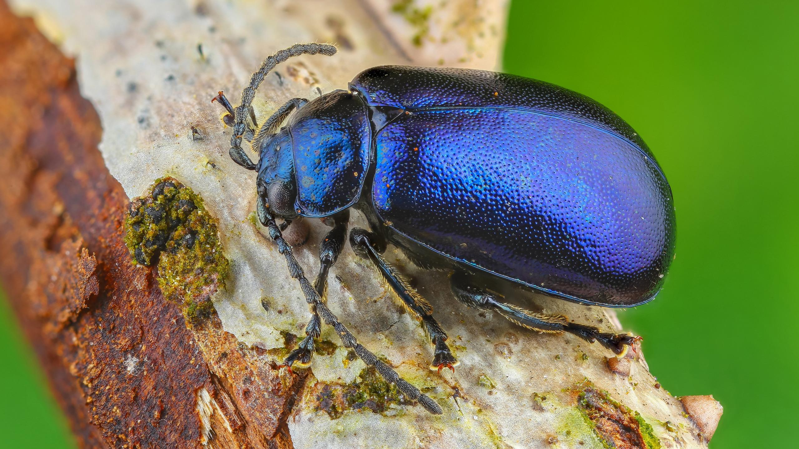 показался фото красивых блестящих жуков что фбр