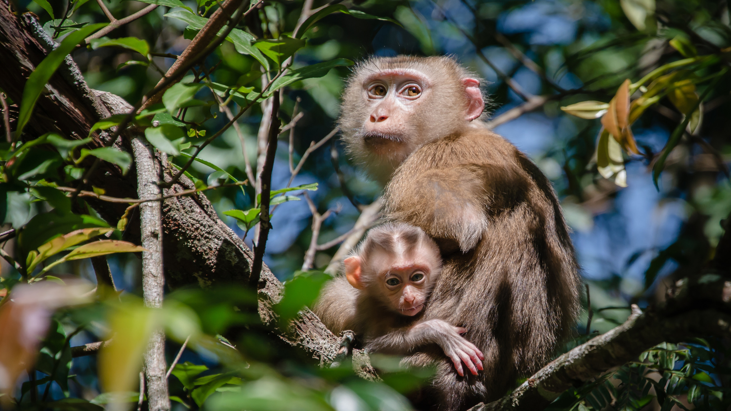 что обезьянка на ветке картинки какой