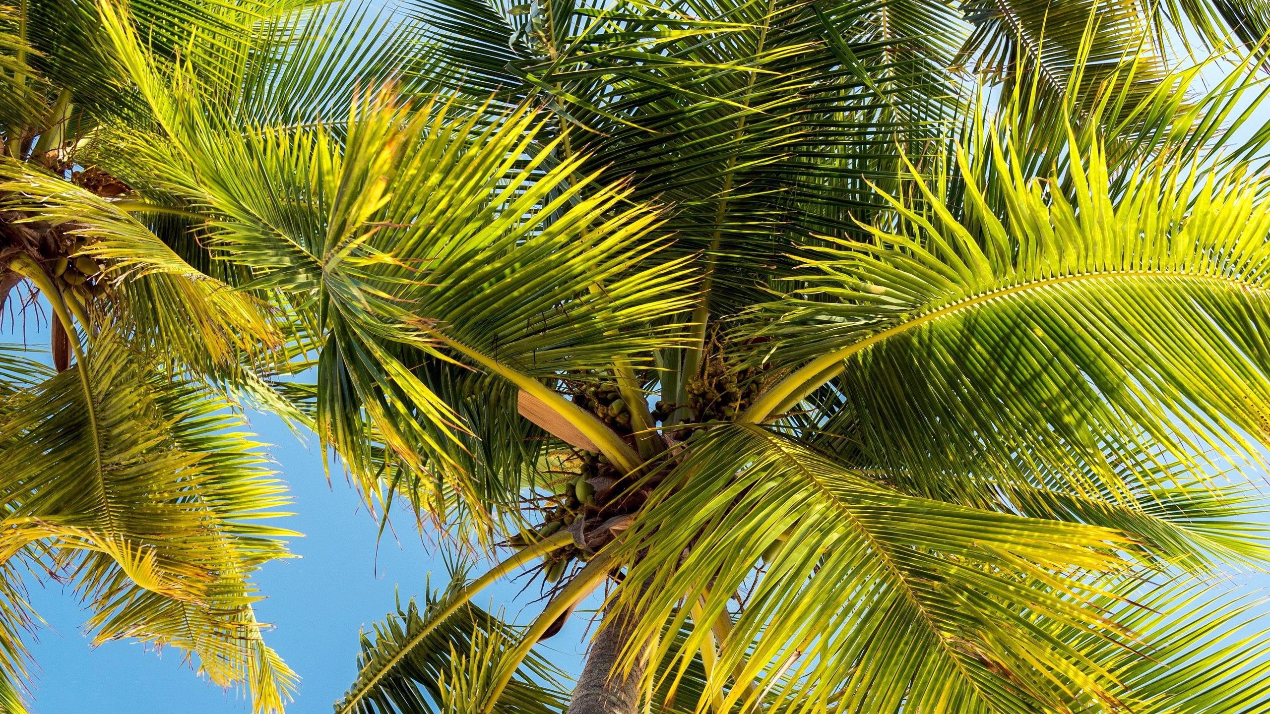 пролетает один смотреть фото пальм тропических меня такой