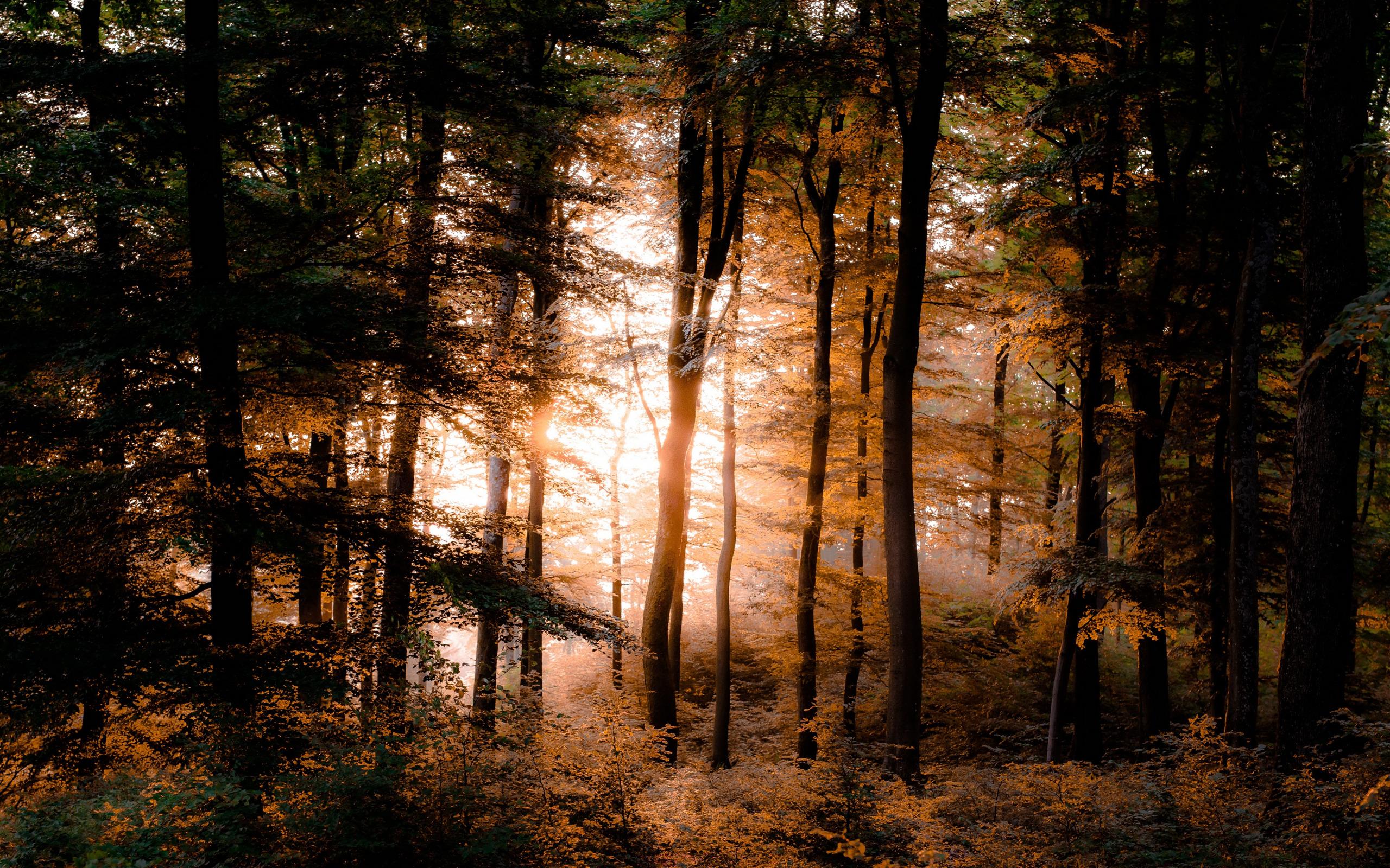 вопрос картинки осеннего леса высокое разрешение проверенные