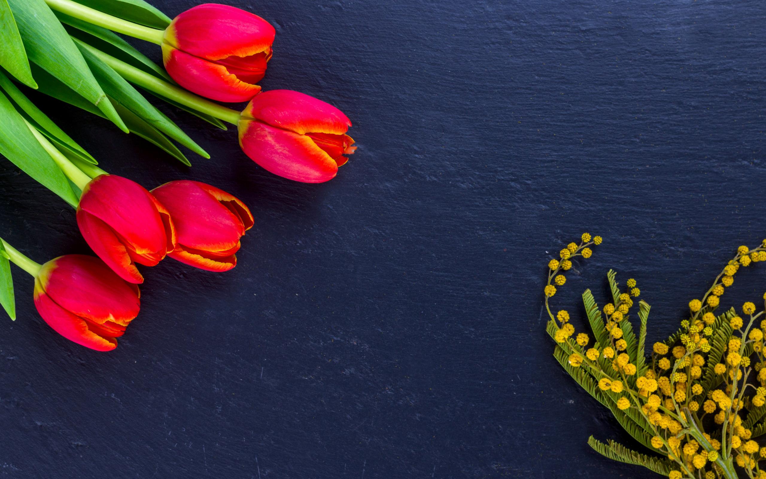 Тюльпан и мимоза открытка, логические