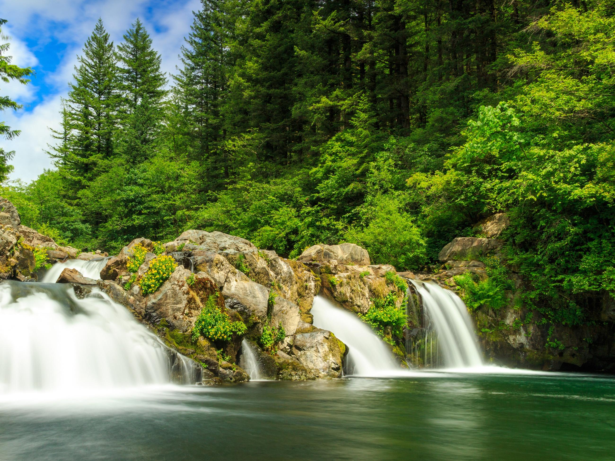лиц обои лесной водопад юбилее