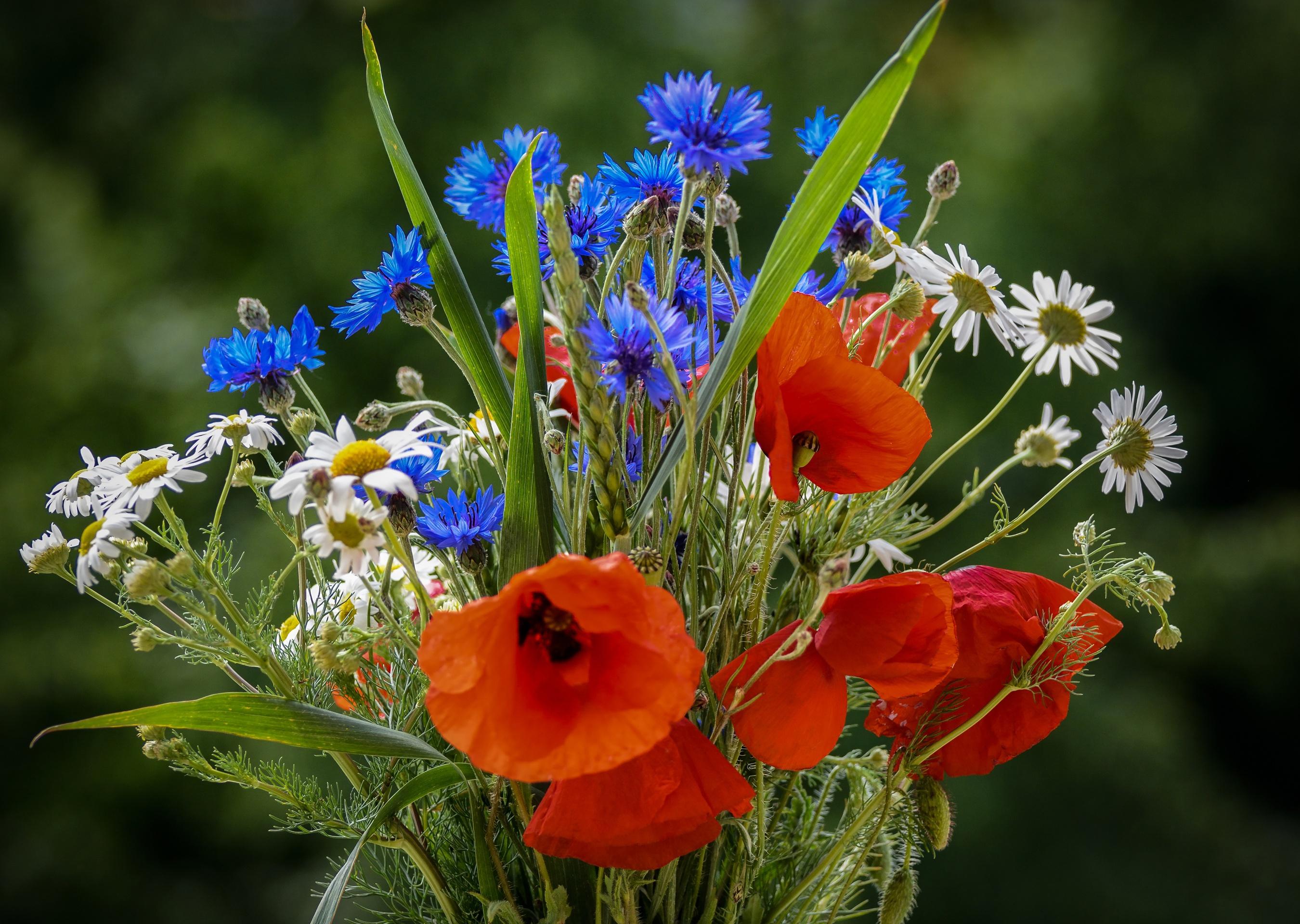 нам полевые цветы фото любимой эксперимента взрослый тагильский