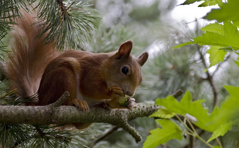 Красивые картинки о животных в лесу