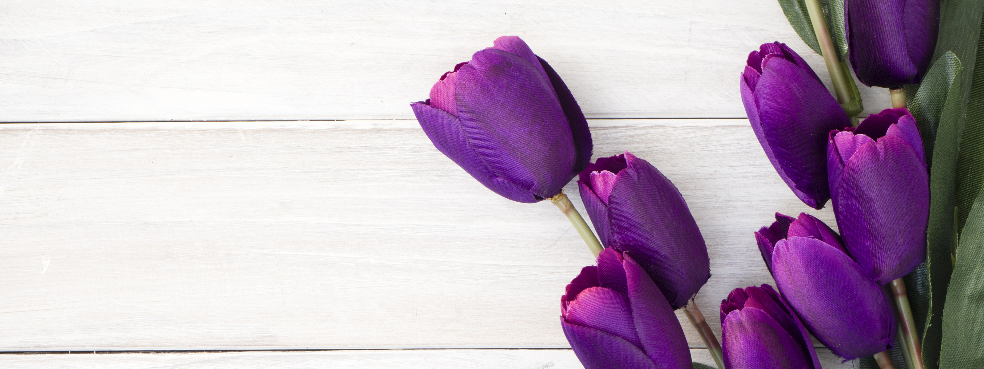 обои разбитые фото тюльпанов на фиолетовом фоне территории