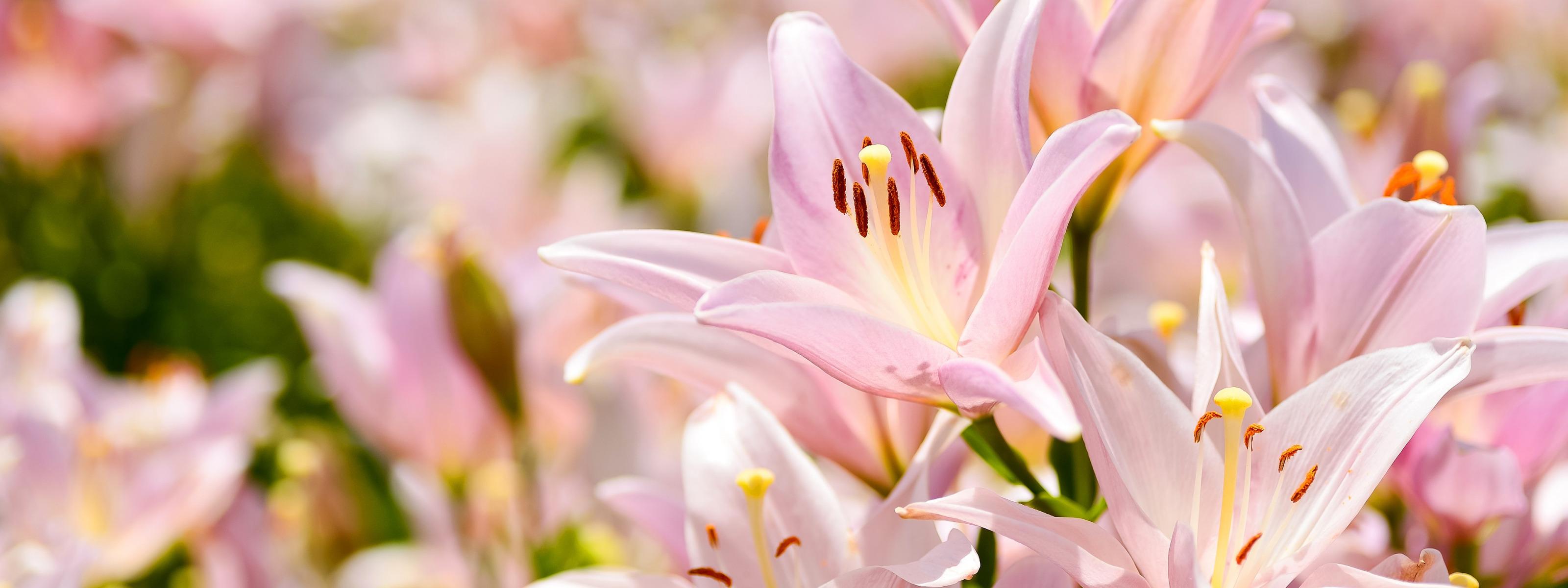 очень фото фон с лилиями мчс