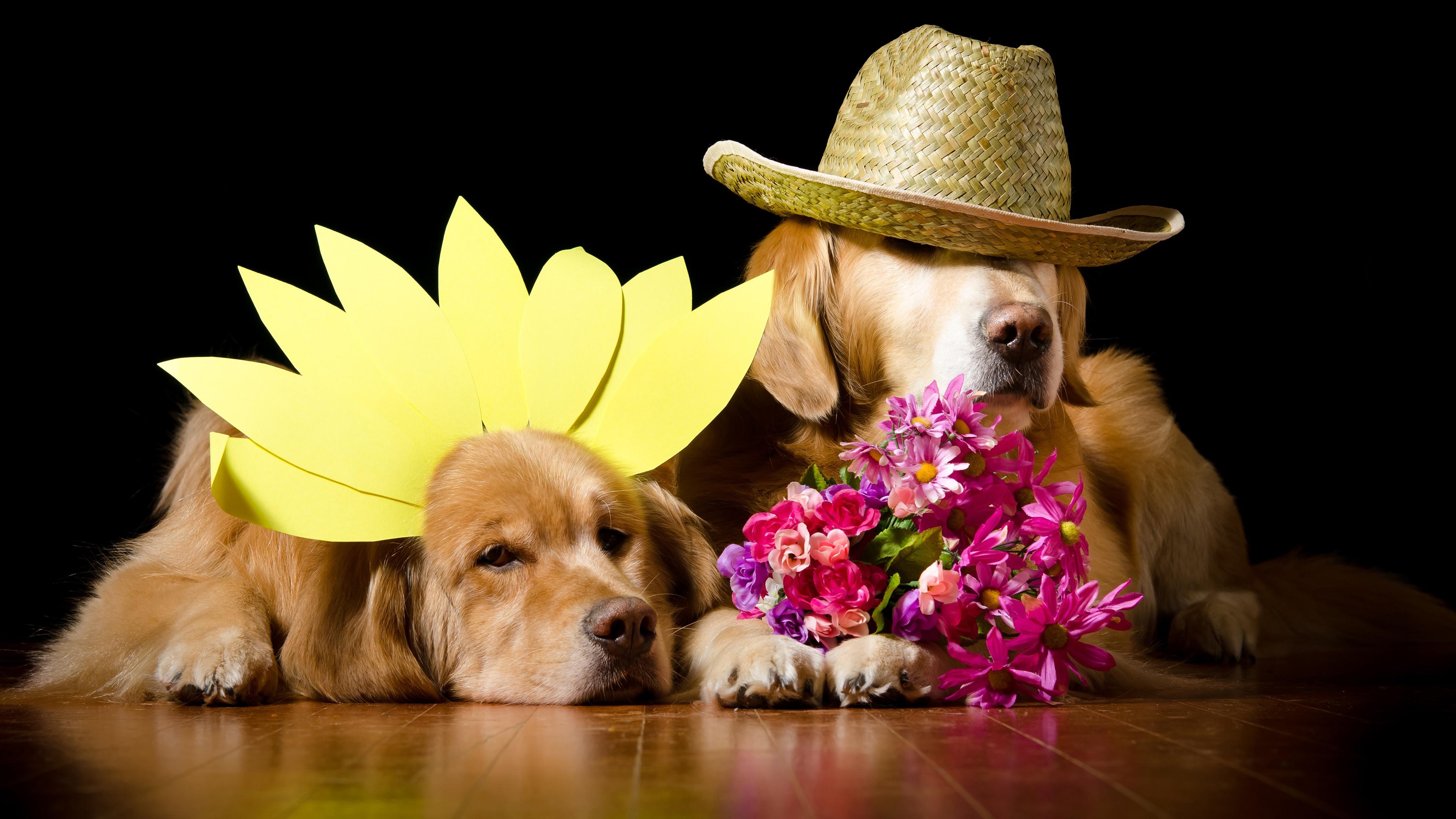 установка щенок с цветами в зубах фото два