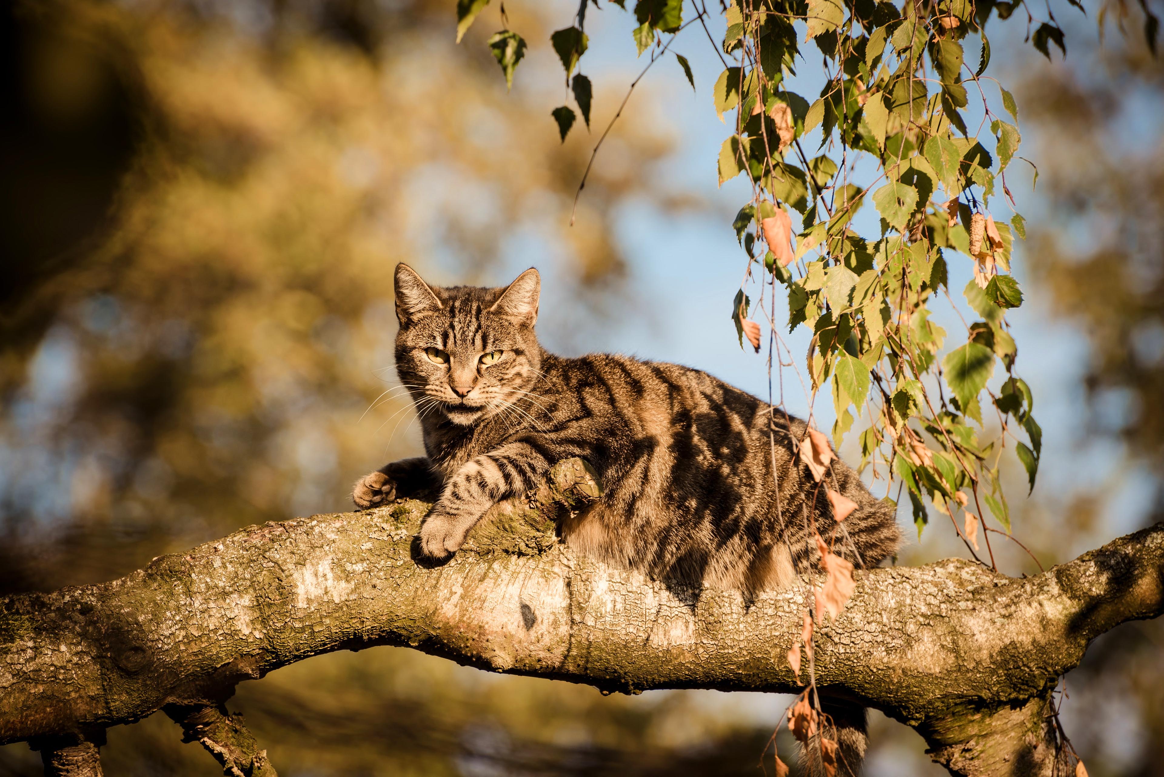 советую фото кошек на дереве фото тех