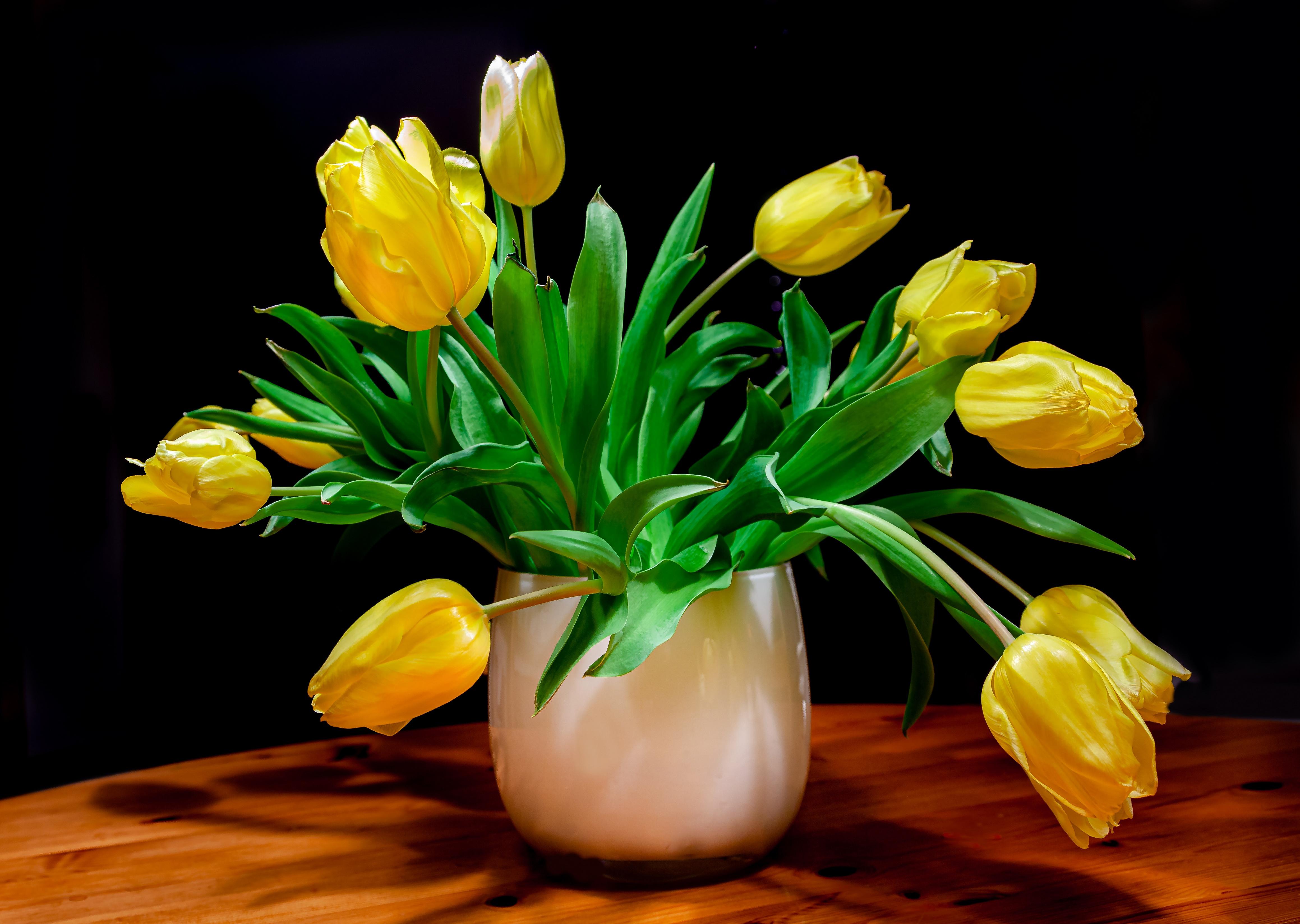 тебя желтые тюльпаны в вазе фото улитководы купают ахатин