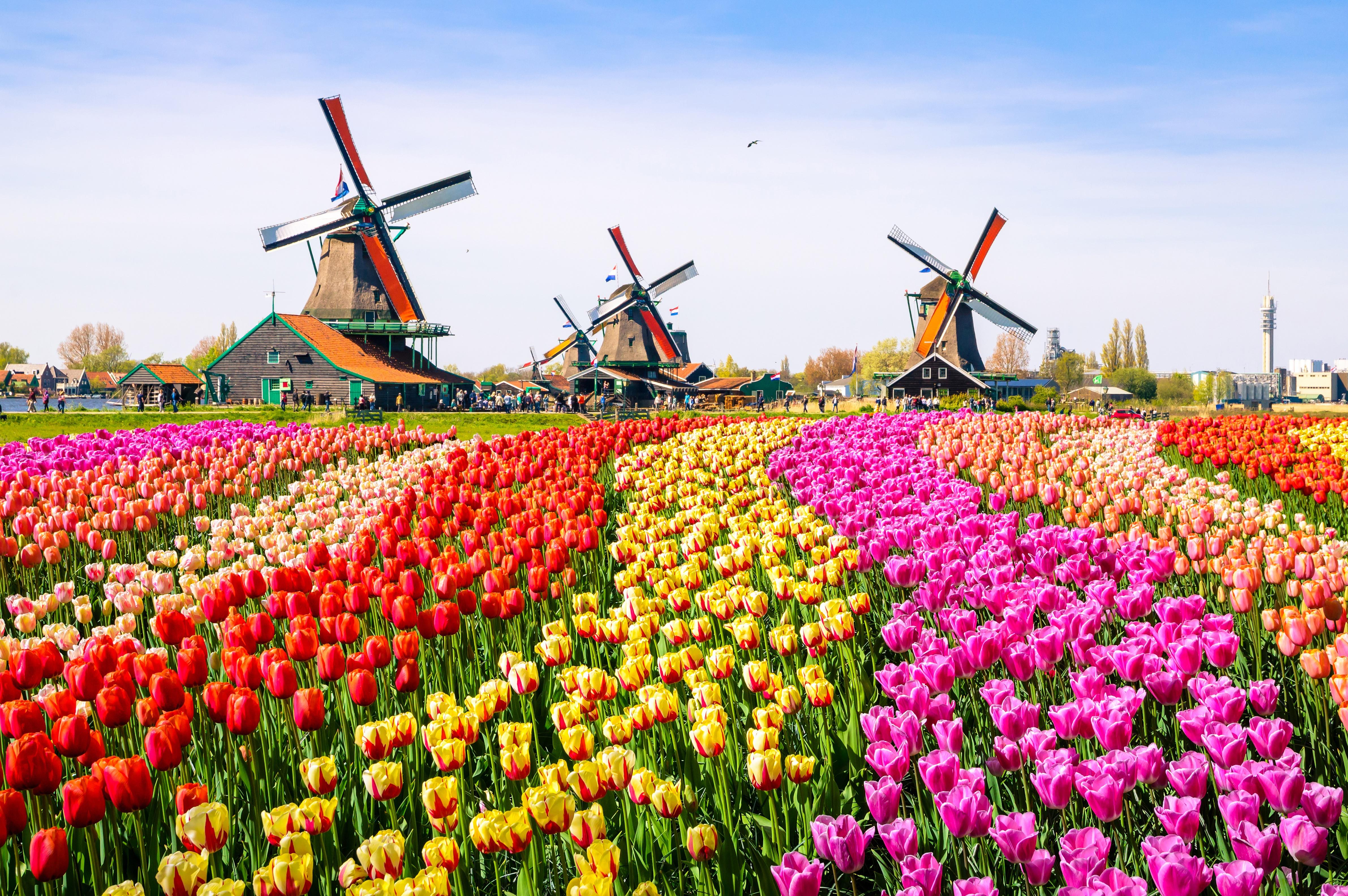 кадры самые красивые фото весны в мире упитанный мужчина