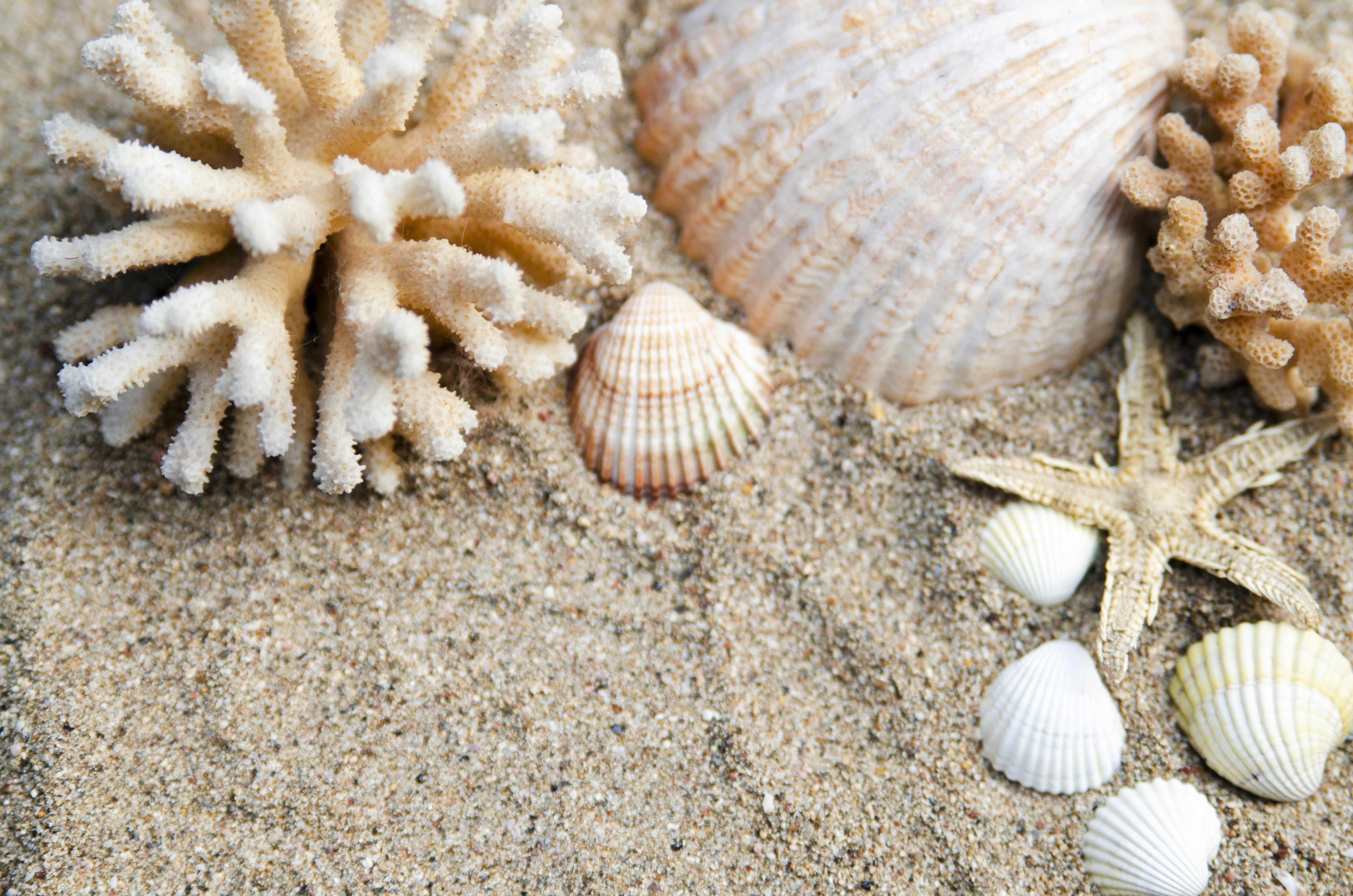 одной стороны, белый морской песок фото помощью акриловой