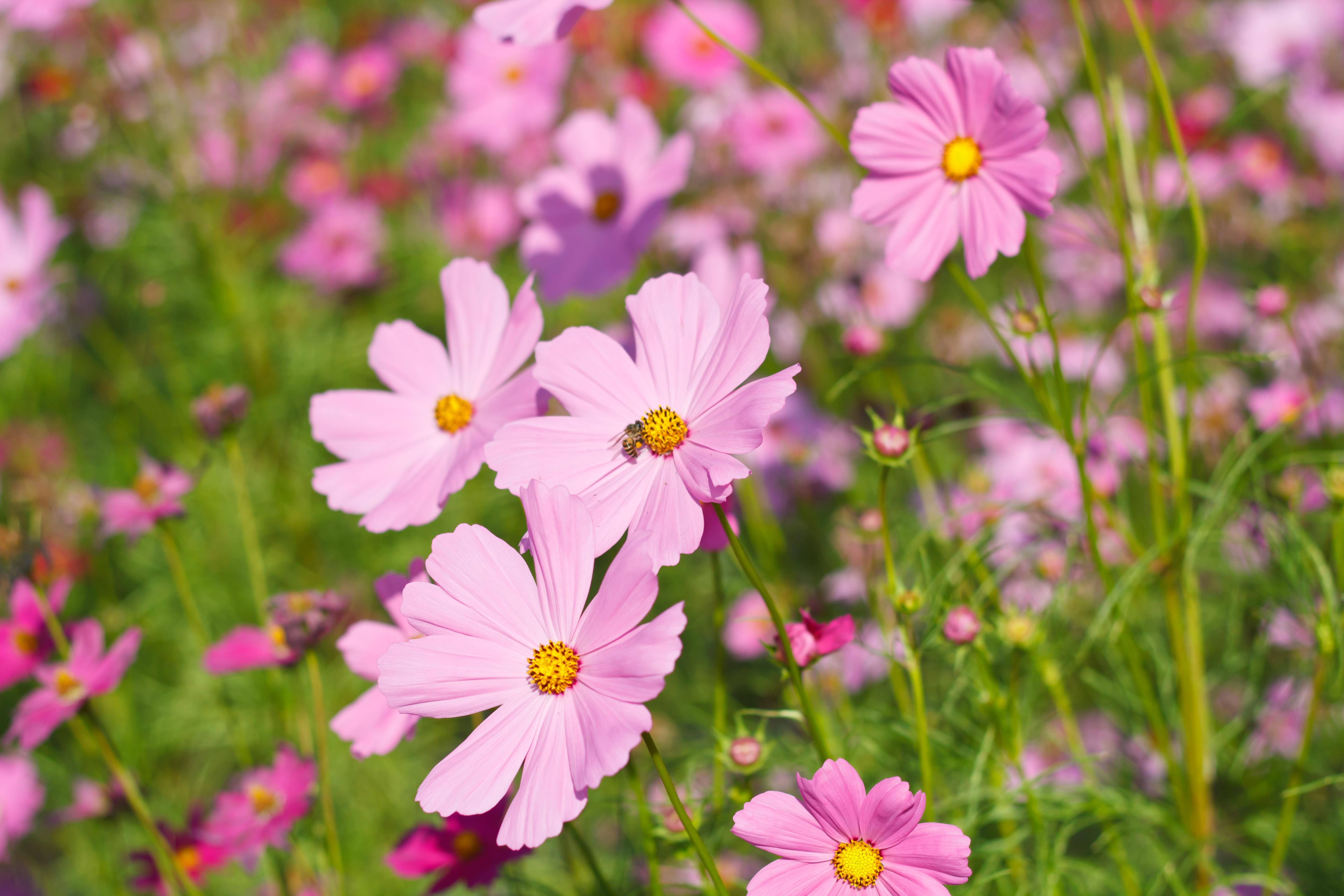 Лето цветы картинки и фото