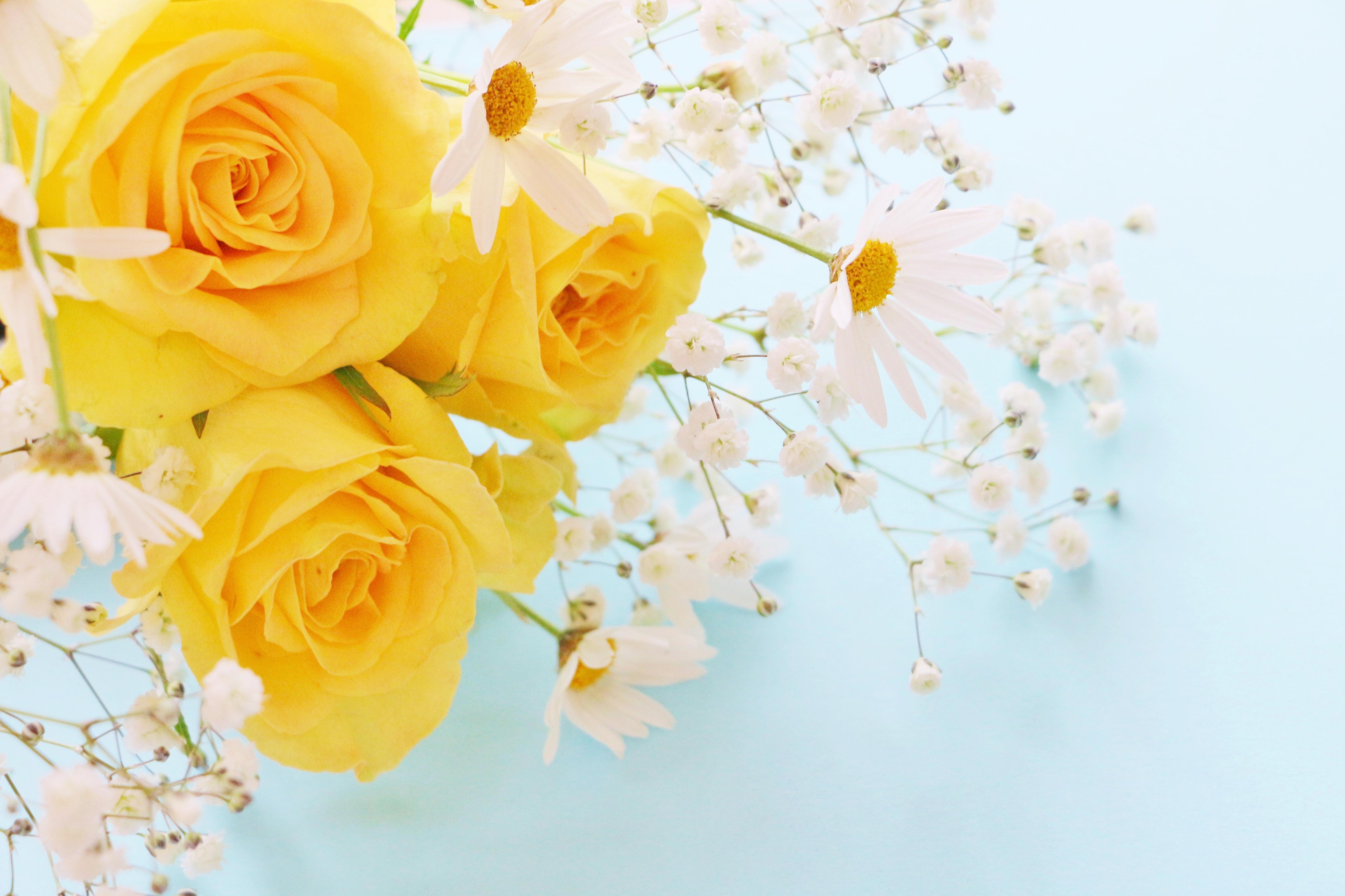 Фон для открытки желтые розы, про