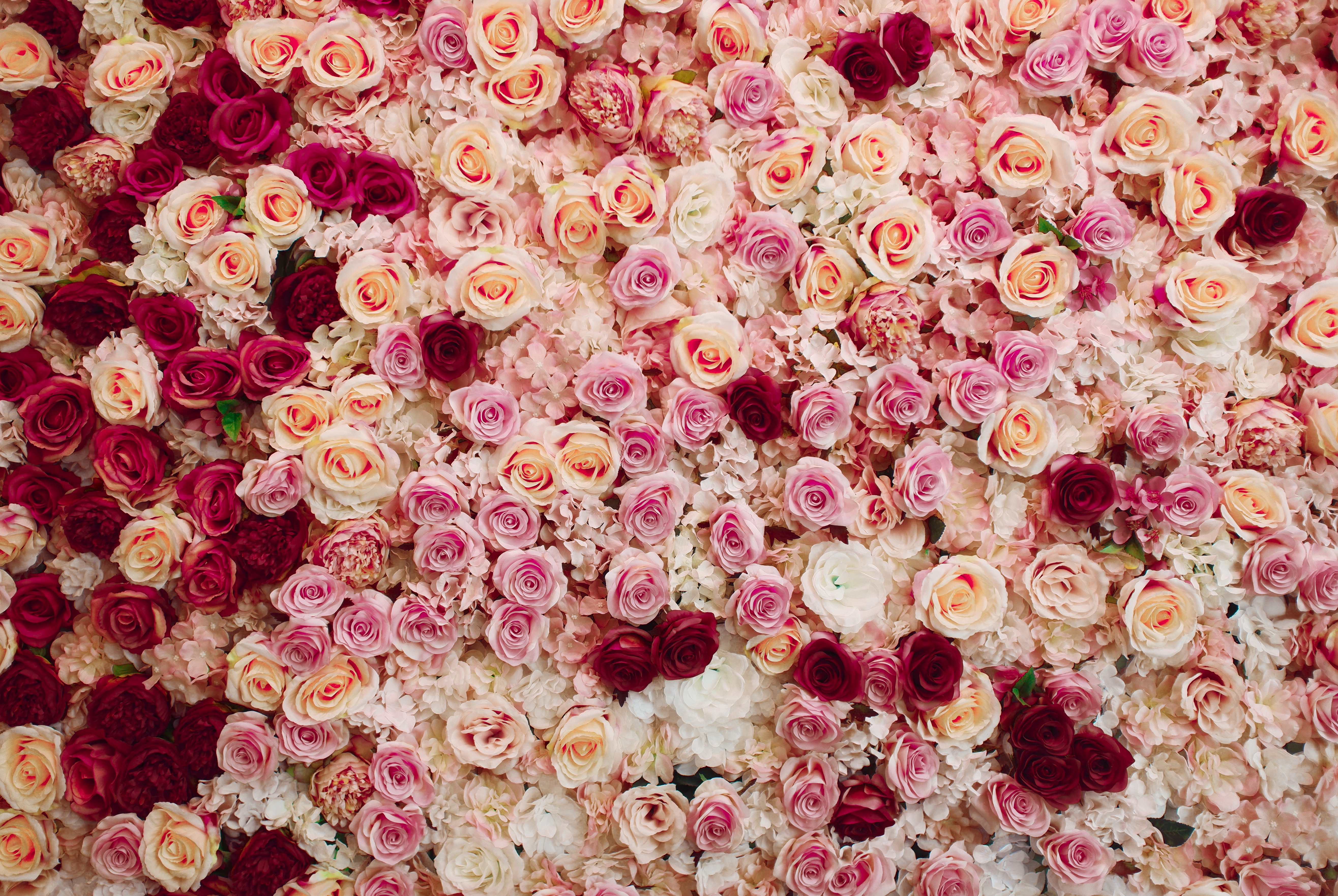 что картинки где много розы только, что для