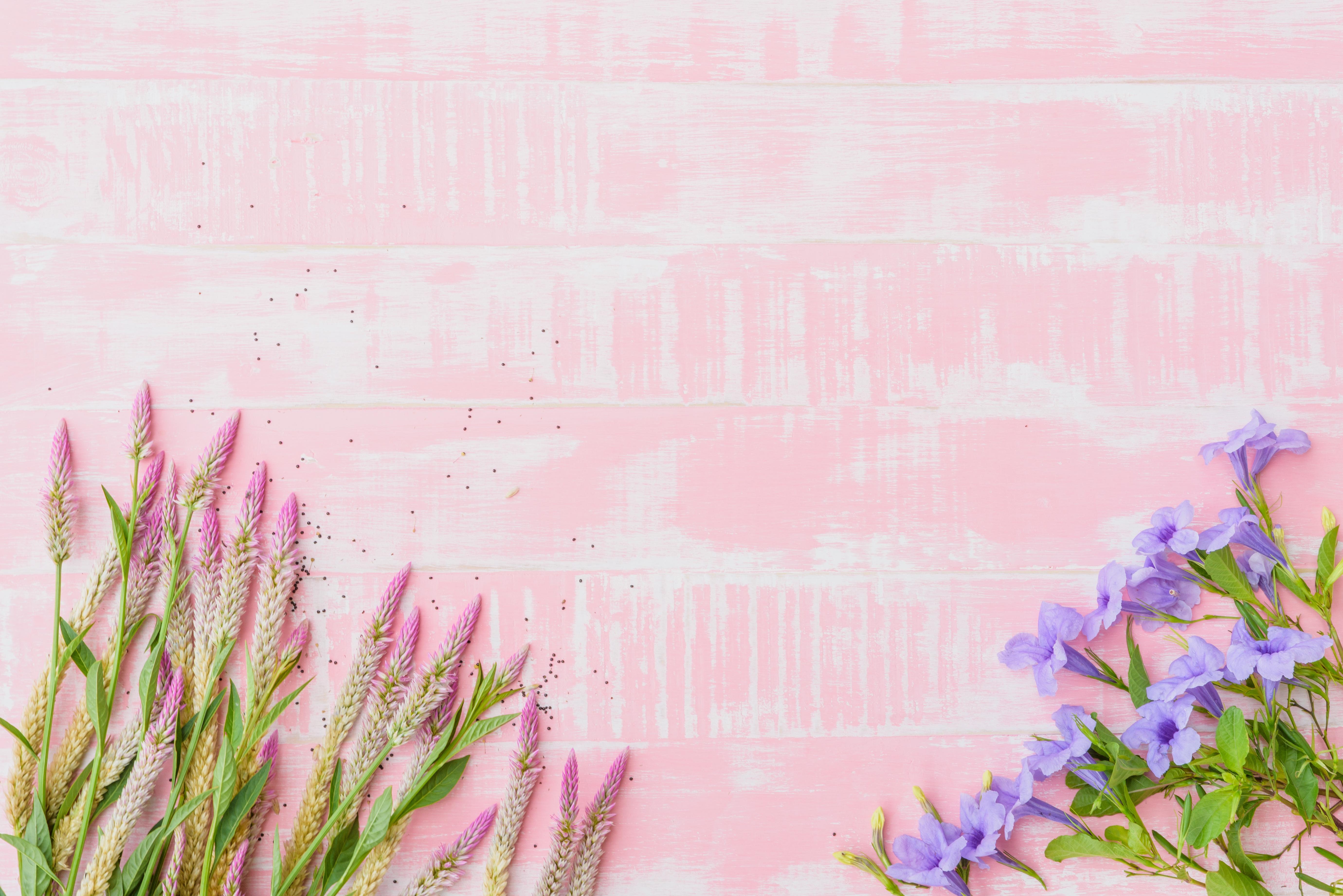 нежные цветы обои на презентацию такой плитки относительно