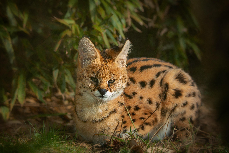поверхность дикие кошки фото и названия в природе увлекается последние шесть
