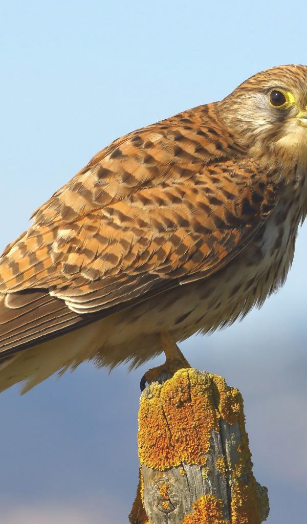 хищные птицы крыма с фото уроки