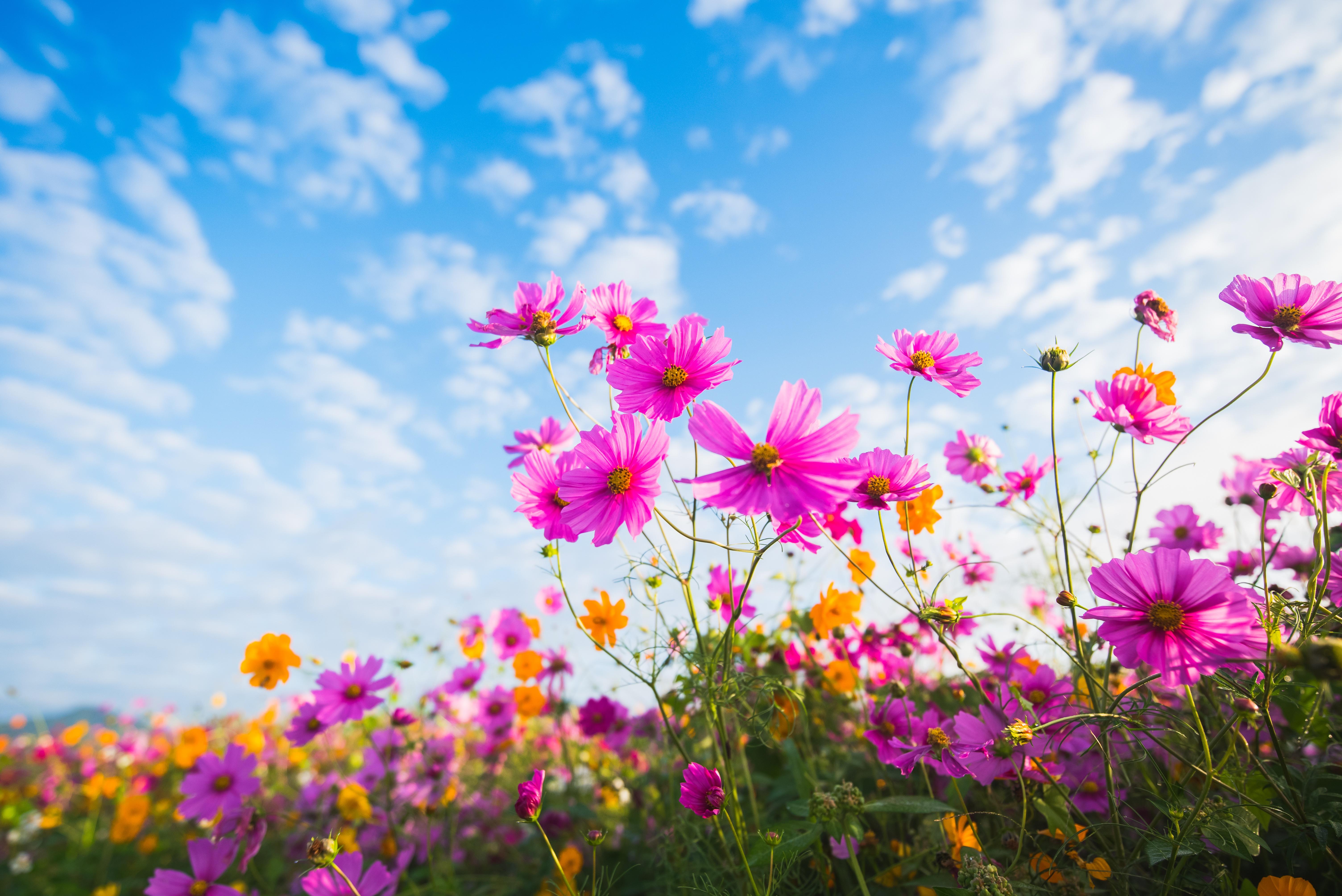будете фото лето цветы и солнце данном