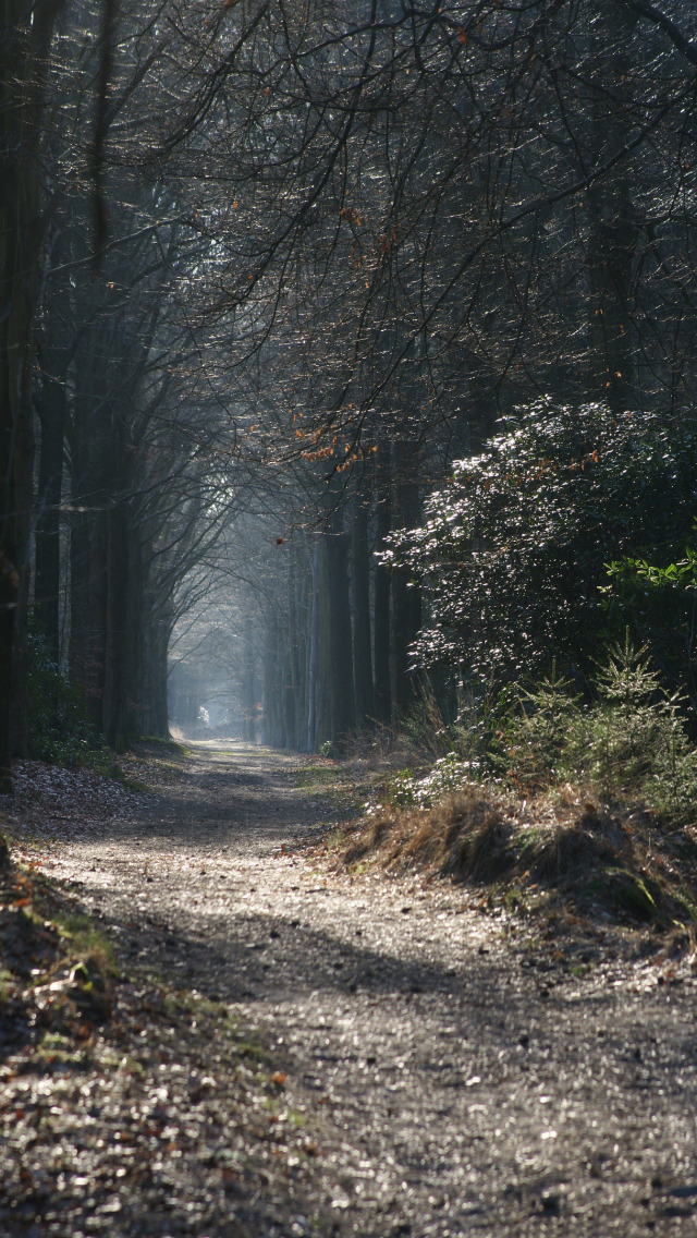 вертикальное фото туманной тропинки хорошо
