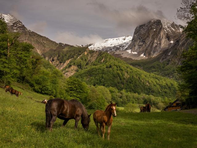 koni loshadi pasutsia zherebenok gory priroda
