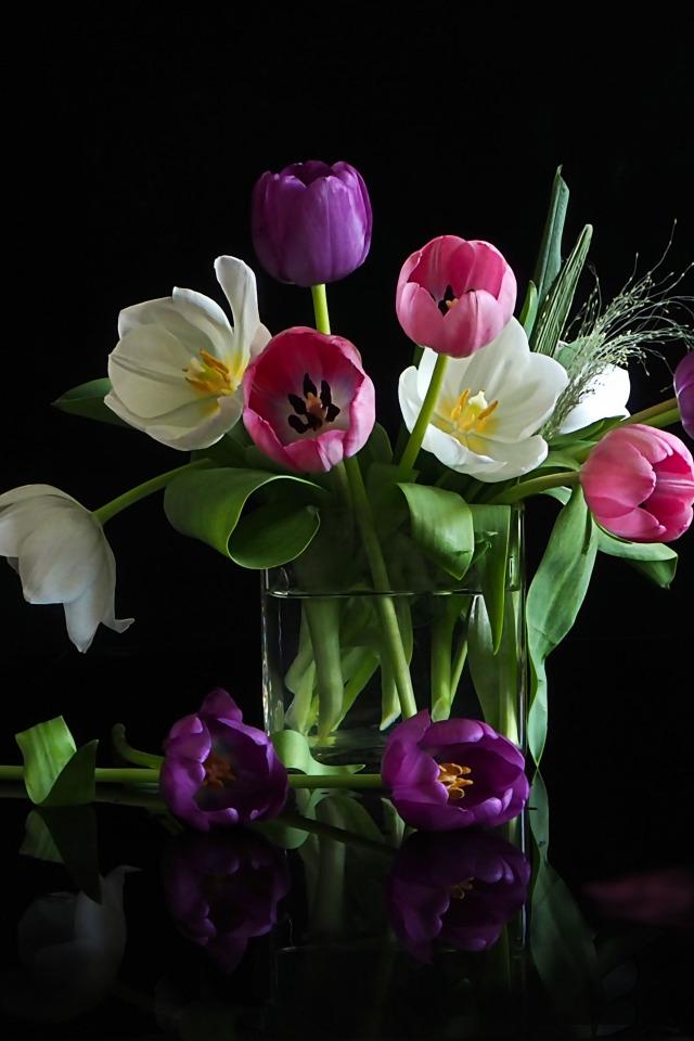 том, тюльпаны на темном фоне картинки убеждены