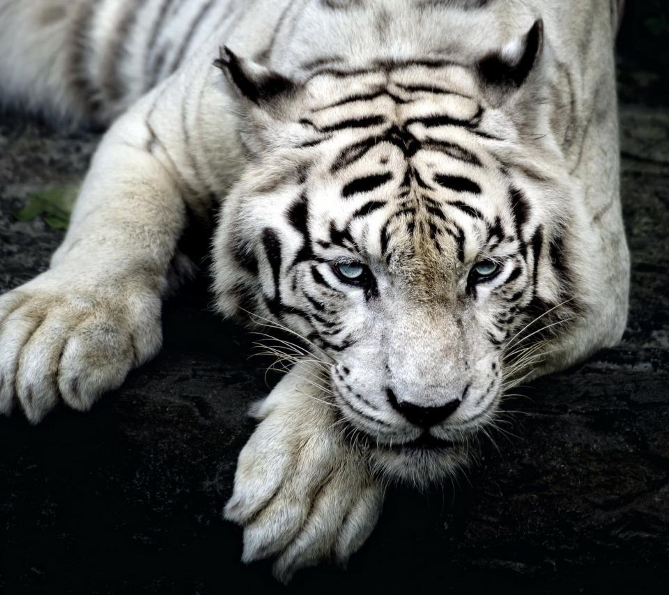 момент картинки на телефон черно белые тигр чтобы