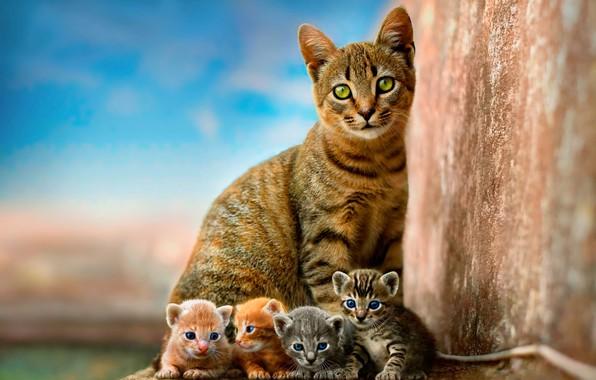 Картинка кошка, небо, дети, котенок, стена, котята, котёнок, малыши, рыжие, серые, мама, голубой фон, квартет, детеныши, …