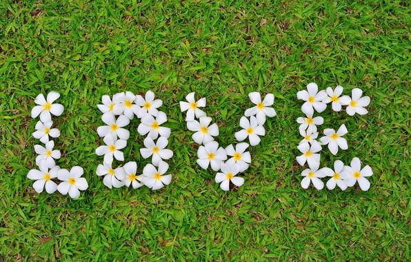 Картинка трава, любовь, цветы, love, white, grass, flowers, romantic, плюмерия, plumeria