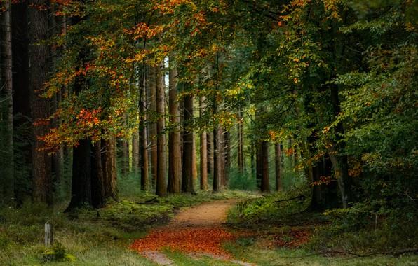 Картинка дорога, осень, лес, деревья, Нидерланды