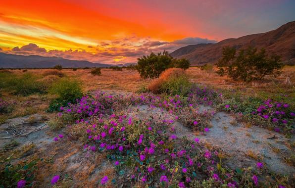 Картинка небо, облака, закат, цветы, природа, Калифорния