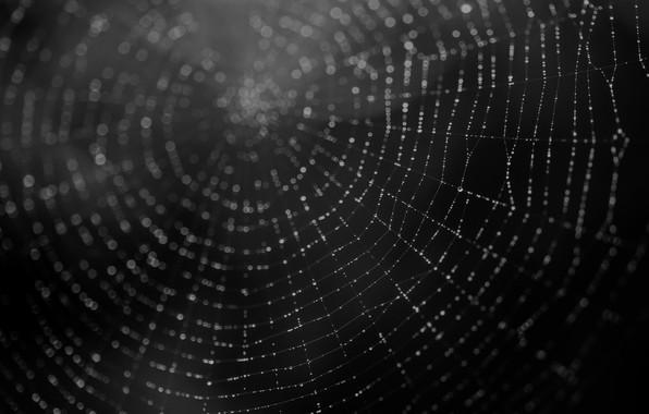 Картинка макро, фон, паутина