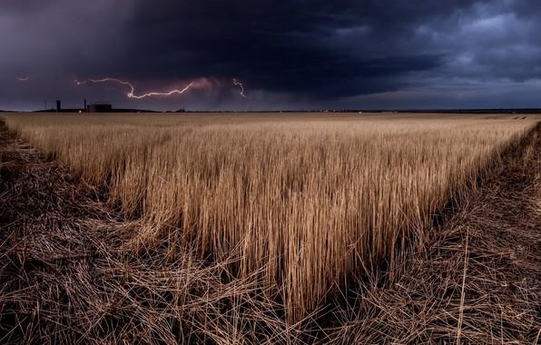 Картинка поле, ночь, природа
