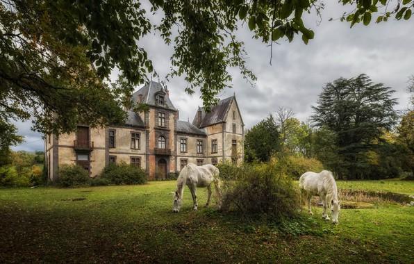 Картинка природа, замок, кони