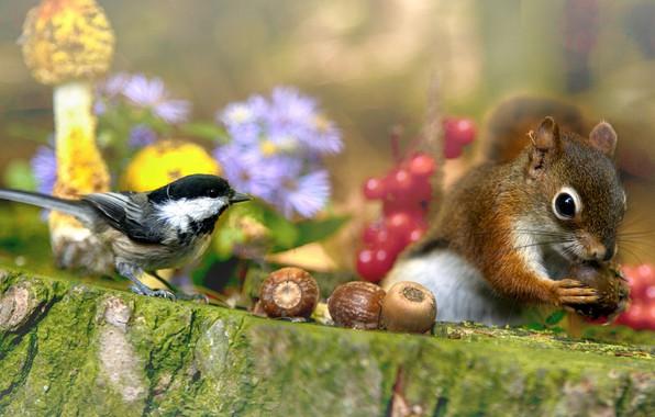 Картинка цветы, природа, ягоды, животное, птица, грибы, пень, белка, орехи, зверёк, грызун, синица