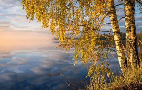 Картинка осень, лес, трава, облака, деревья, пейзаж, природа, туман, озеро, отражение, берег, утро, берёзы, Финляндия