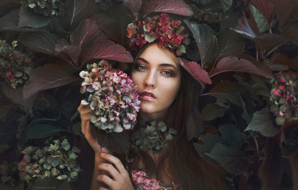Картинка взгляд, девушка, цветы, фото, гортензия, Marketa Novak