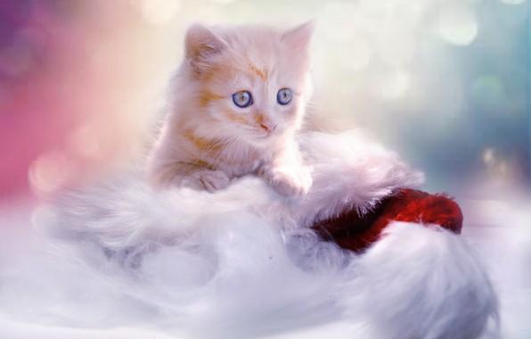 Картинка малыш, рыжий, Рождество, Новый год, котёнок, колпак