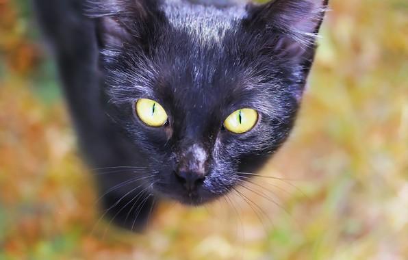 Картинка кошка, морда, фон