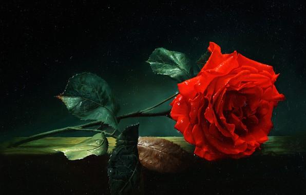 Картинка масло, Алексей Антонов, «Роза»