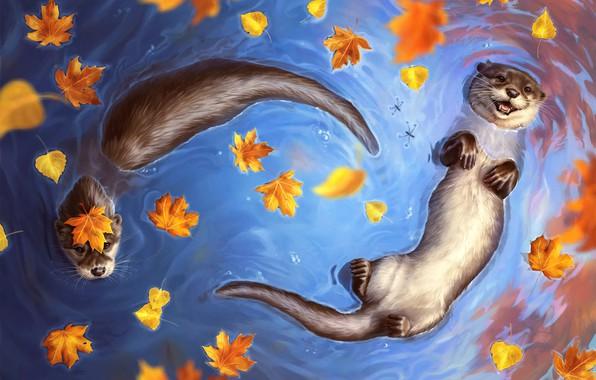 Картинка Вода, Осень, Озеро, Река, Листья, Water, Вид сверху, Autumn, Выдра, River, Lake, Leaves, Водоём, Otter, …