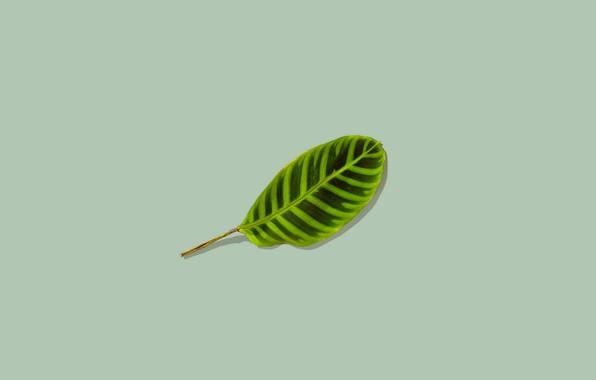 Картинка фон, листок, минимализм, зелёный