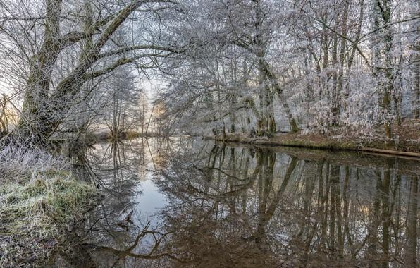 Картинка зима, иней, лес, деревья, озеро, изморось