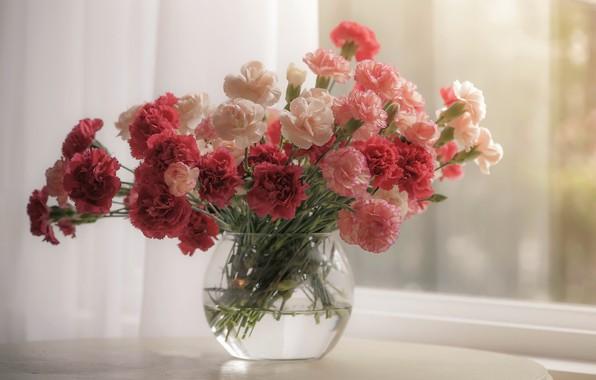 Картинка цветы, окно, гвоздики