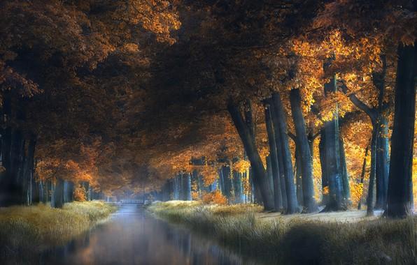 Картинка деревья, мост, парк, канал