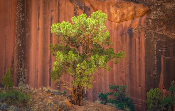 Картинка дерево, скалы, rocks, tree, Jeffrey C. Sink