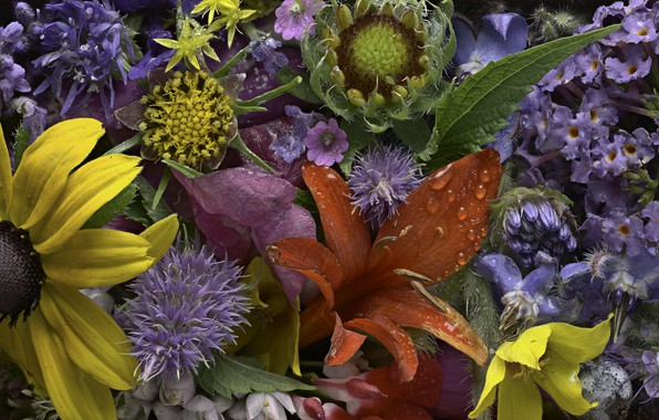 Картинка капли, цветы, роса, текстура, бутоны, Martin Dollenkamp