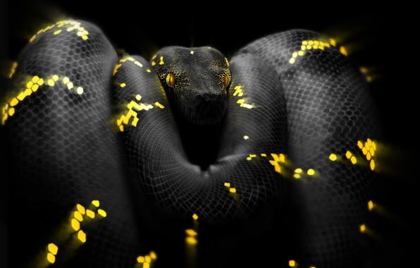 Картинка Змея, Глаза, Голова, Питон, Арт, Snake, Python, by Ben Judd, Ben Judd, Surreal Snake